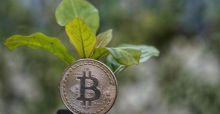 Image de Bitcoin et d'une plante