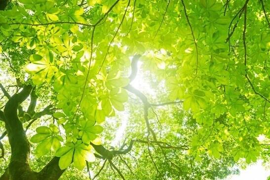 Des arbres verts traversés par la lumière du soleil